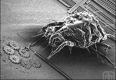 Dust mite inspecting some nano-tech gears